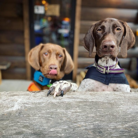 Happy Monday! Shop dogs Willow and Stomper hope you have time to stop by for some pets today. Might as well check out some of our swag and get your bike serviced while you drink a beer 🍻   #ridebikes #thehubpisgah #pisgahtavern #pisgahnationalforest #pisgahforest #shopdog